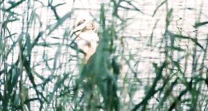 Ольга Машная купается голышом